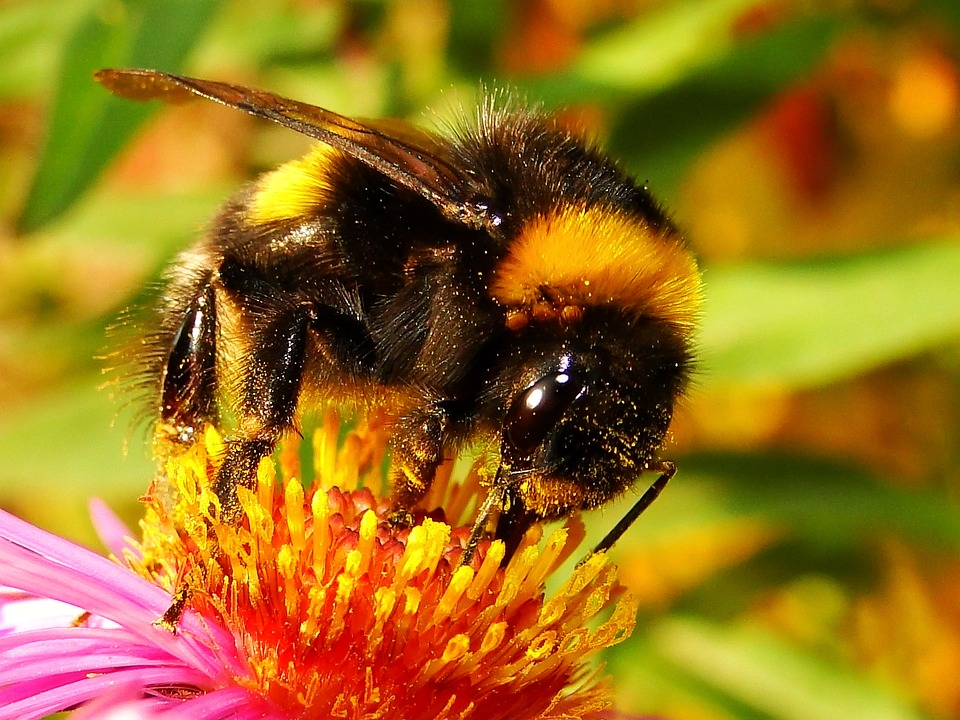 Insect, Apiformes, Nature, Honey, Pollen, Animals