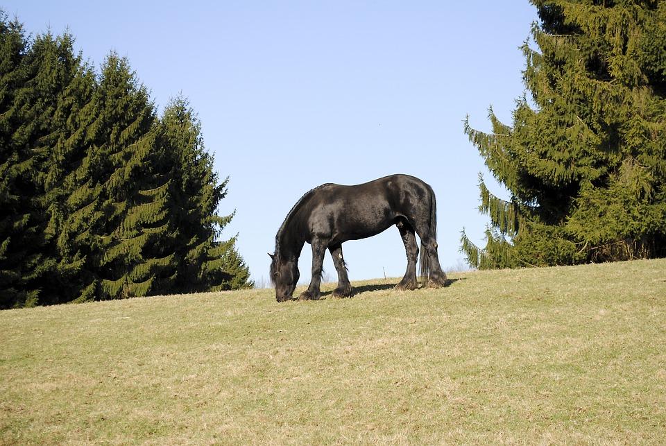 Horse, Black, Pasture, Animals, Landscape