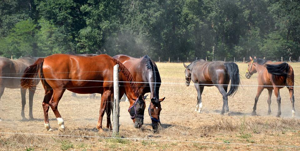 Animals, Horses, Pasture, Coupling, Paddock, Graze