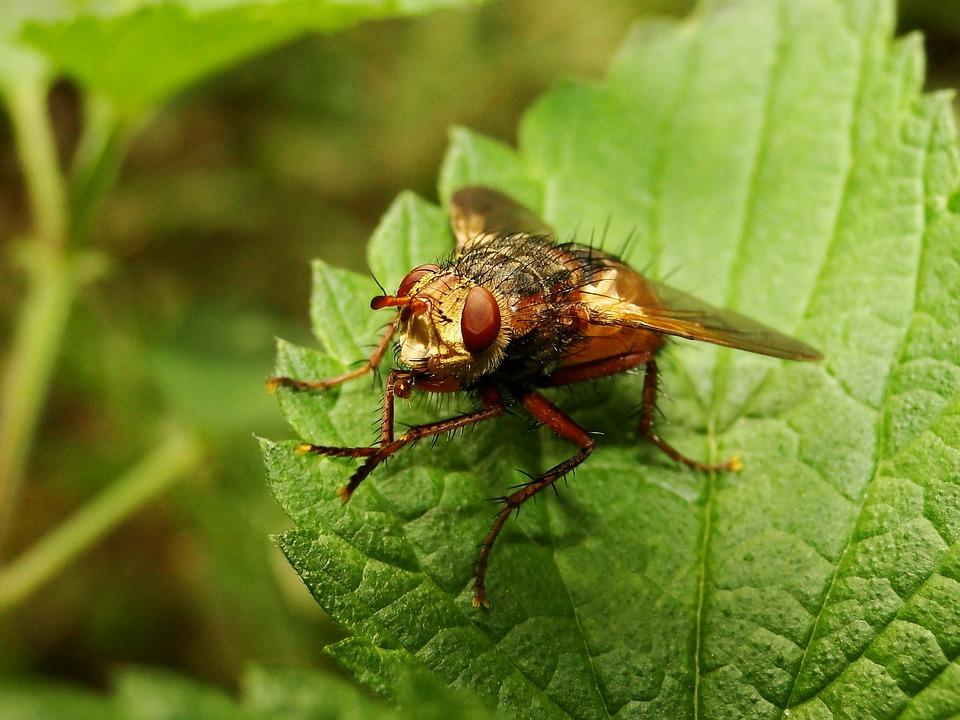 Nature, Insect, Leaf, Closeup, Animals, Muchówki