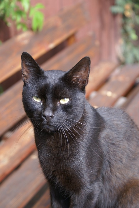 Kitten, Animals, Look, Domestic Cat