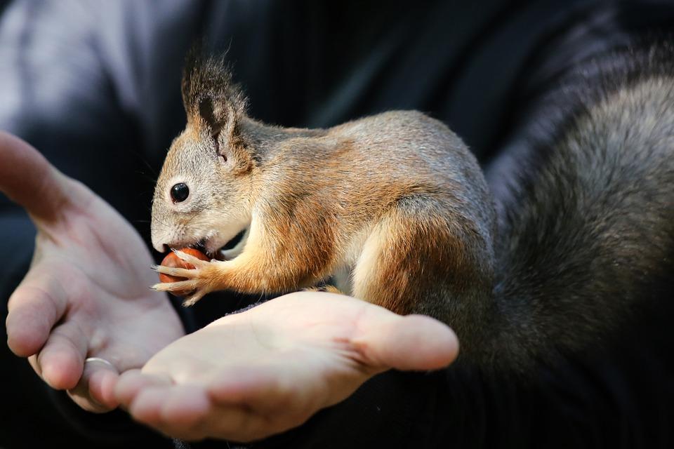 Mammals, Cute, Living Nature, One, Little, Animals