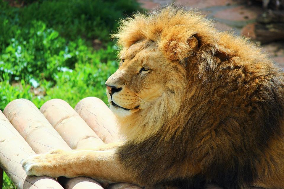 Al, Mammals, Nature, Wildlife, Animals