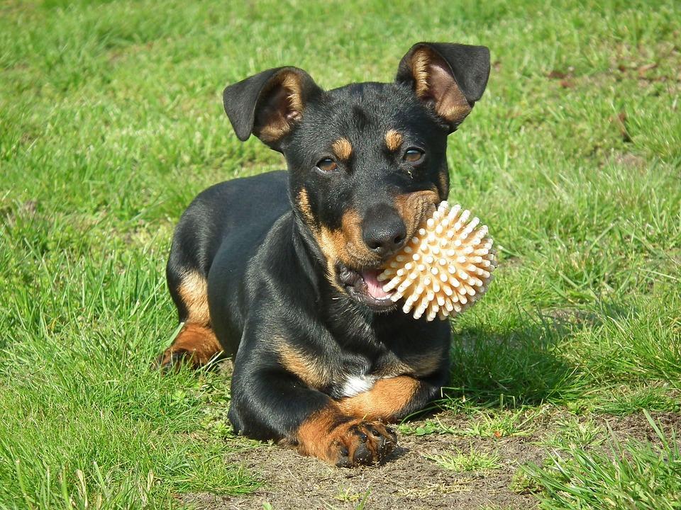 Dog House, Mammals, Charming, Animals, Lawn