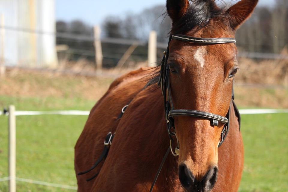 Horse, Horses, Animals, Animal, Nature, Mare, Mammals