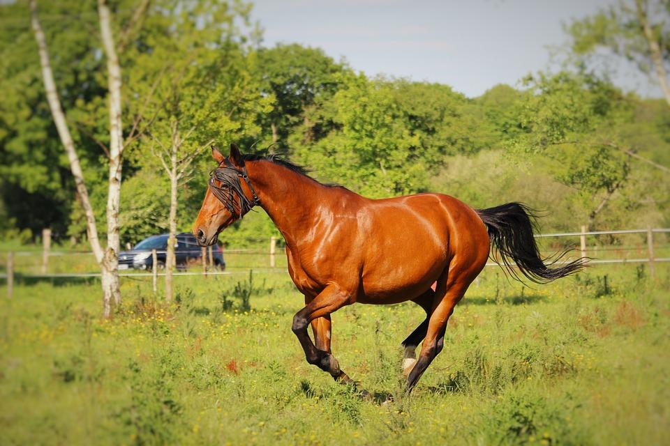 Horse Walker, Horse, Horses, Nature, Animals, Mare
