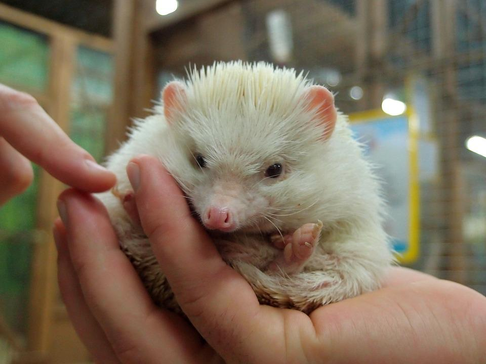 Zoo, Petting Zoo, Animals, Mini Zoo, Hedgehog