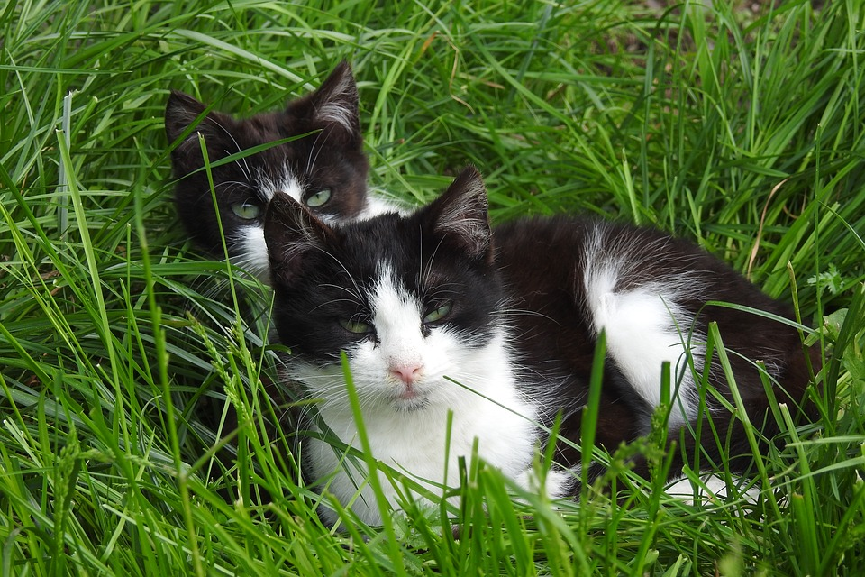 Lawn, Charming, Animals, Nature, Cat, National, Mammals
