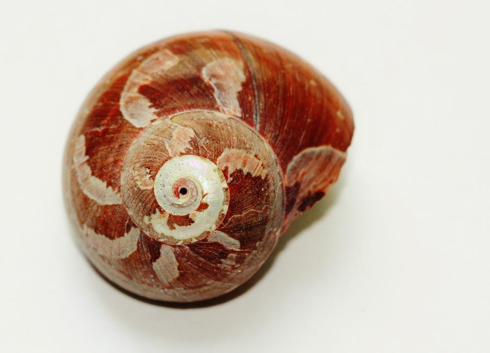 Snail, Shell, Close, Snail Shell, Nature, Animals