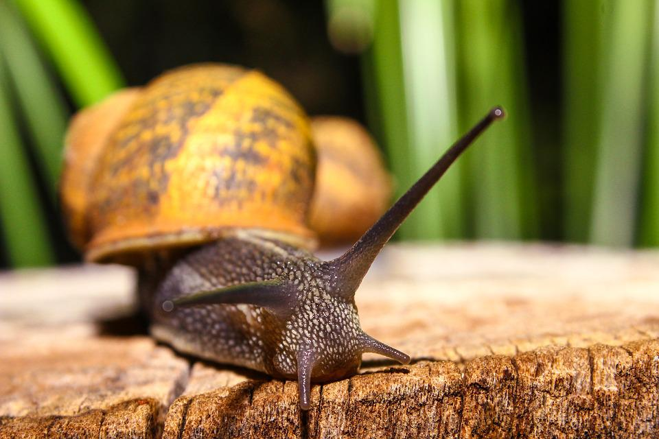 Snail, Animal, Nature, Animals, Shell, Forest, Green