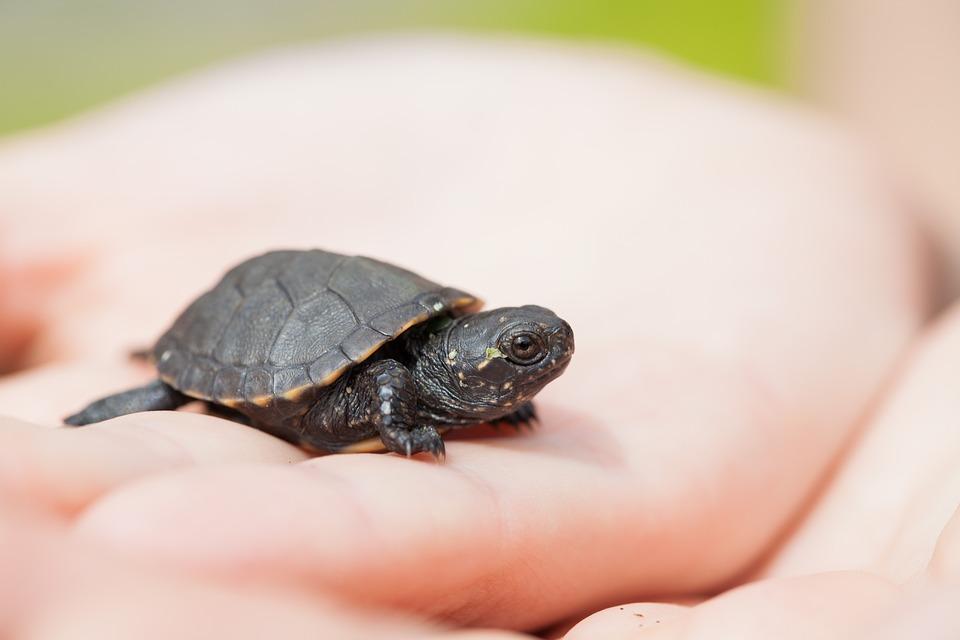 Bug, Tortoise, Palm, Animals, Eyes, Reptile