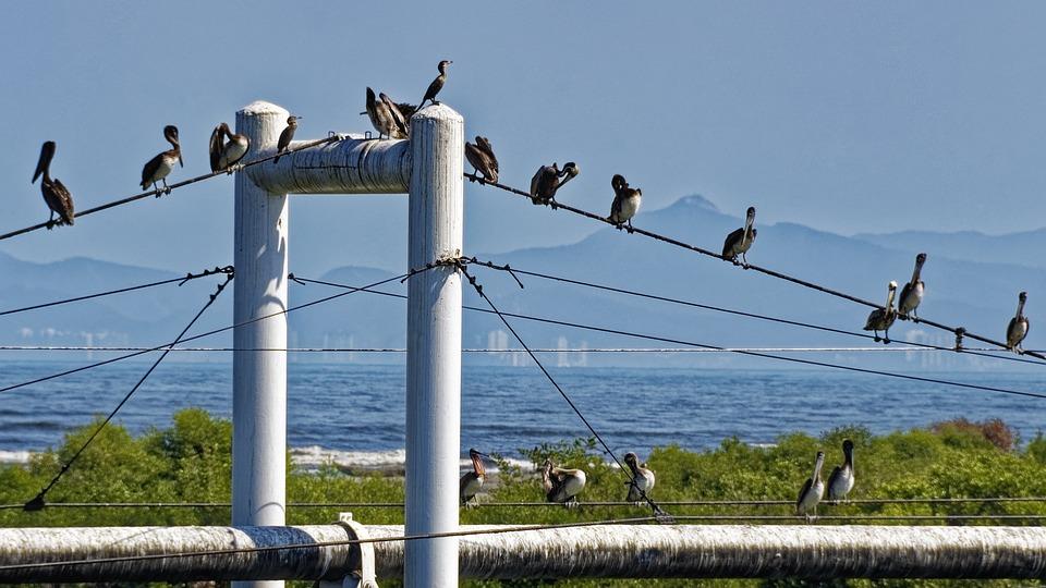 Birds, Pelicans, Animals, Bridge Piers, Nature