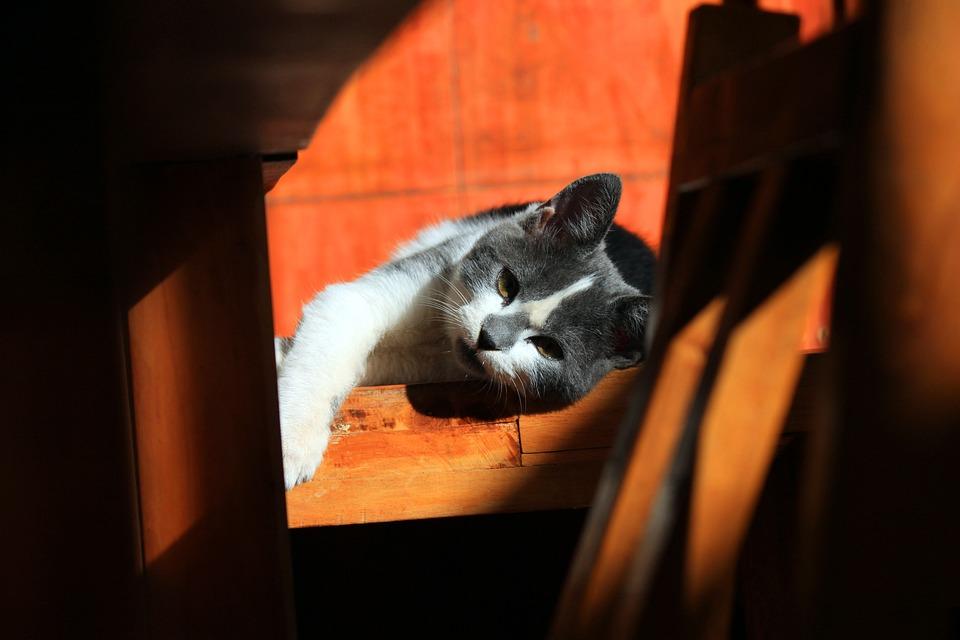 Cat, Animals, Pet, Rest, Pets