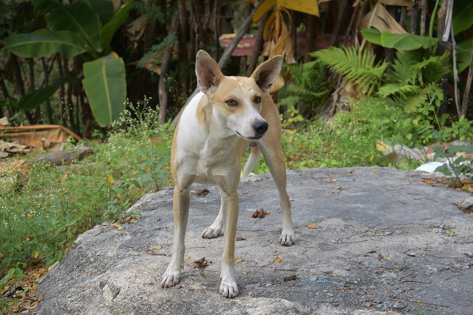 Dog, Animal, Animals, Puppy, Pets, Cute, Pet, Dogs