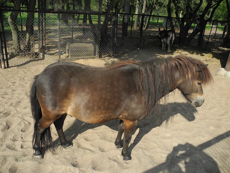 Donkey, Mini Zoo, Petting Zoo, Animals, Sand, Park