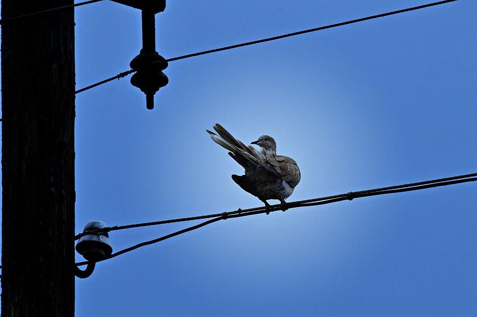 Pigeon, Turtledove, Bird, Animals, Winged