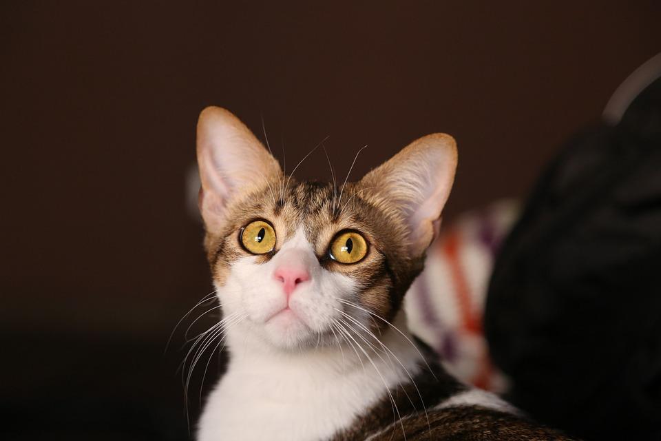 Cat, Pet, Animal, Feline, Rest, Animals, Friend, Kitten