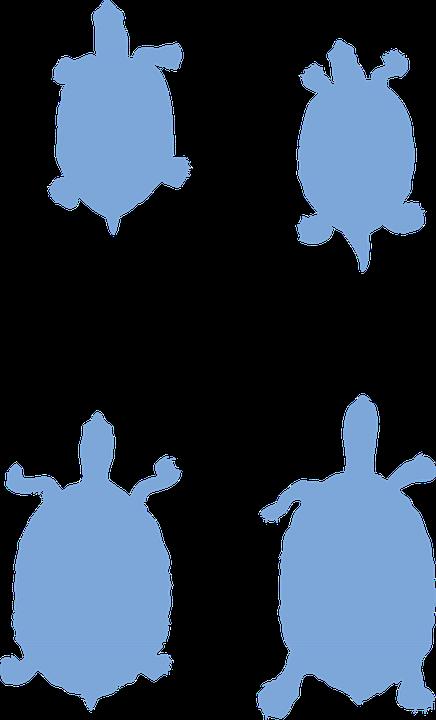 Turtles, Animals, Silhouette, Shells, Wildlife, Nature