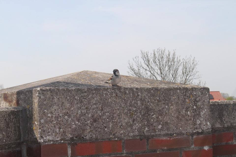 Bird, Sparrow, Animals