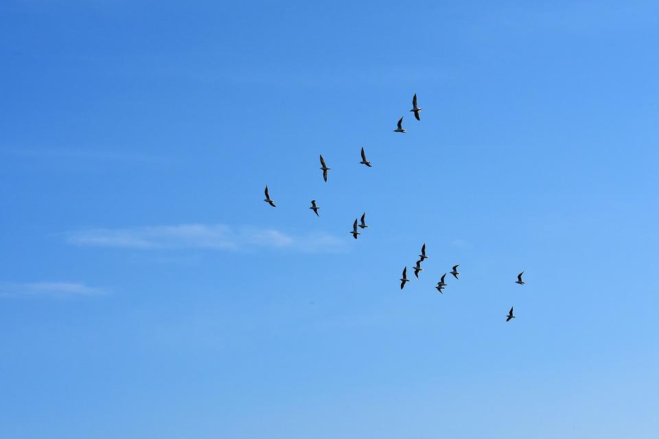 Gulls, Swarm, Birds, Blue Sky, Sun, Animals