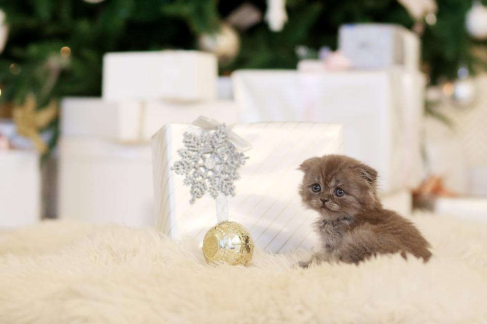 Kitten, Pet, Cute, Animals, Little, Home, View, Animal