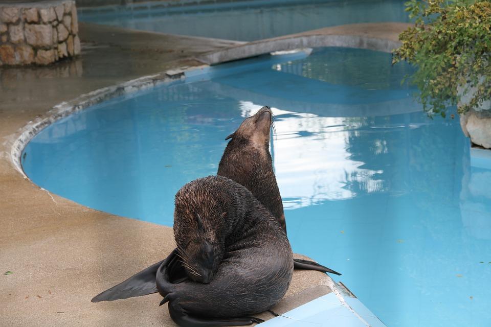 Seals, Animals, Zoo, Aquatic Animals, Water, Wild