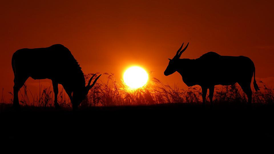 Sunset, Animals, Nature, Landscape, Silhouette, Wild