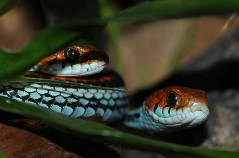 Snake, Zoo, Animals, Reptile, Snakehead, Yellow