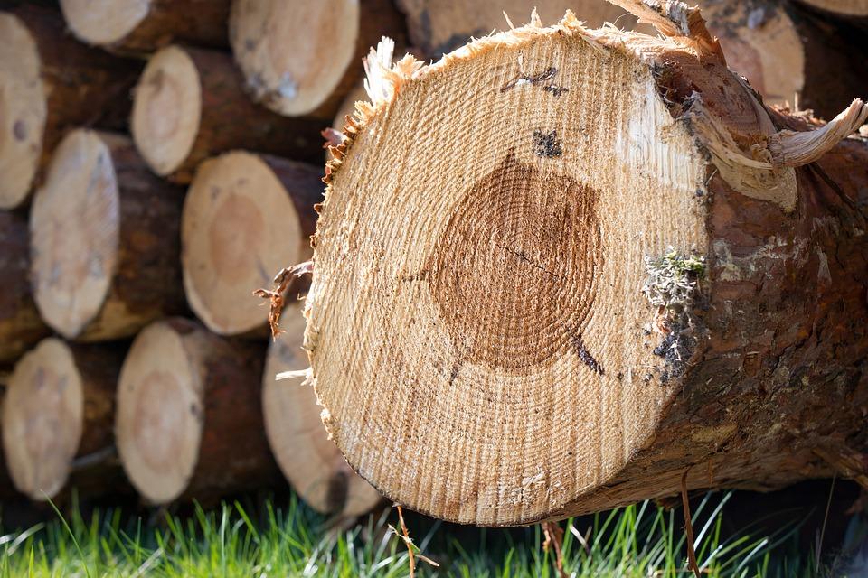 Wood, Strains, Tree Trunks, Annual Rings