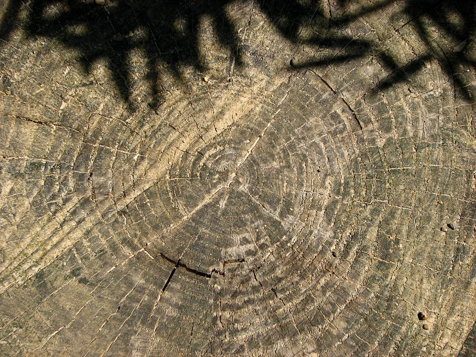 Tree Grates, Annual Rings, Tree Stump, Tree, Shadow