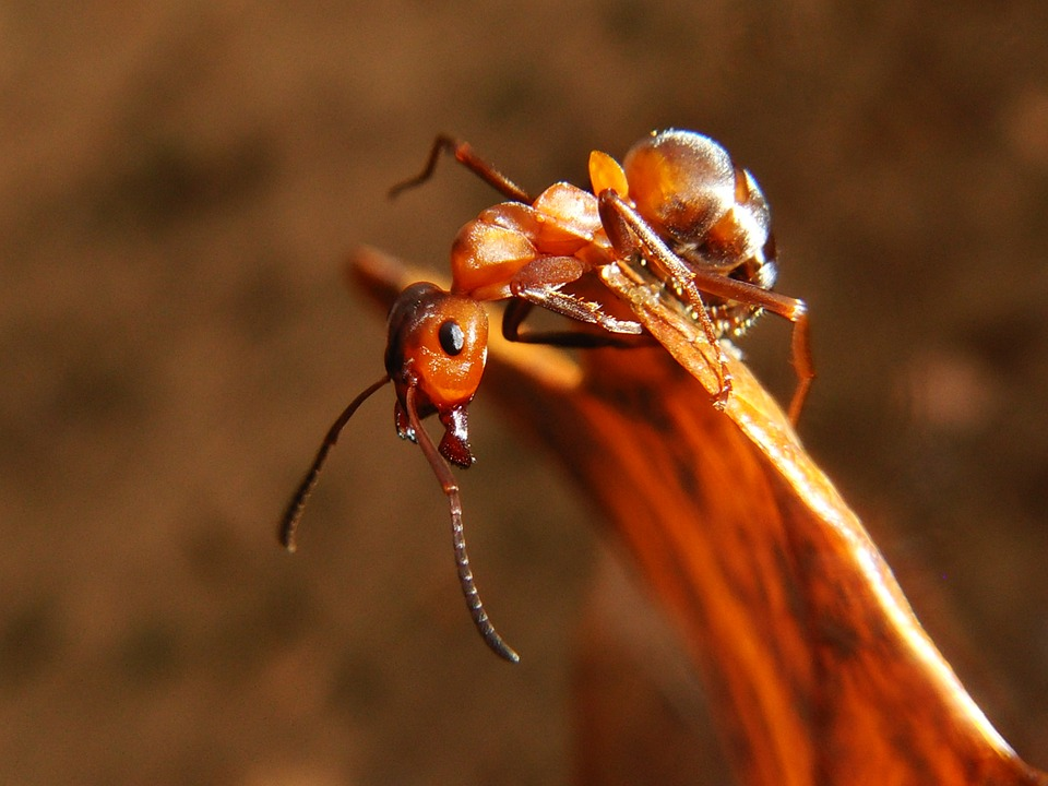 Insect, Invertebrates, Nature, No One, Animals, Ant
