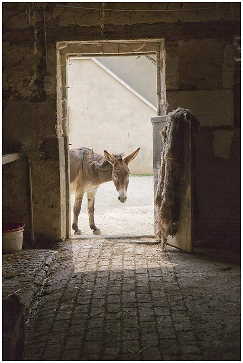 Animal, Door, Donkey, Farm, Animals, Rural, Antan