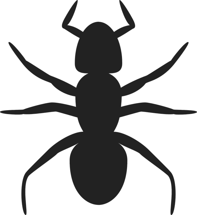 Ant, Insect, Colony, Anthill, Pest, Ante, Stinging