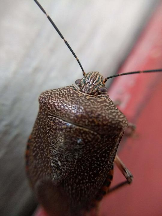 Insect, Nature, Antenna, Feeler