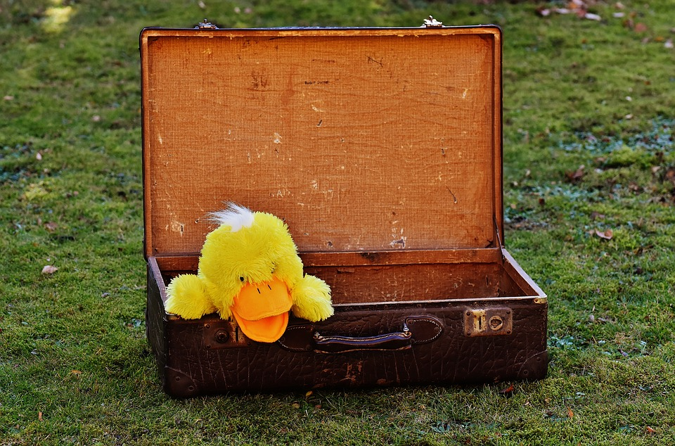 Luggage, Antique, Duck, Funny, Curious, Leather