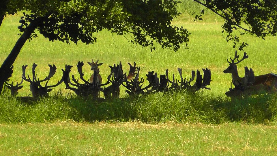 Antler, Nature, Animal, Red Deer, Flock, Hirsch, Deer