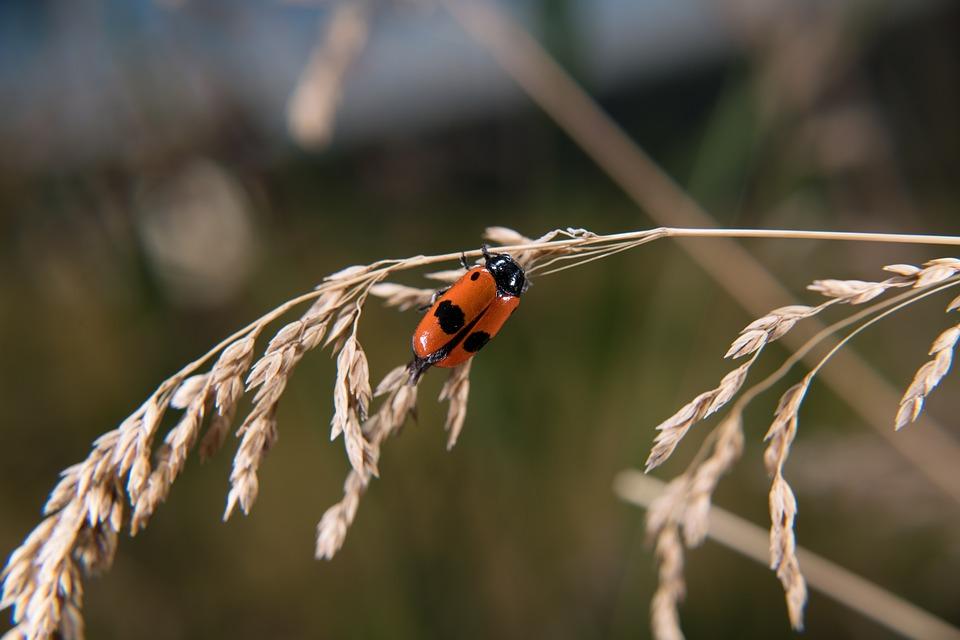 Leaf Beetle, Ants Bag Of Beetles, Beetle