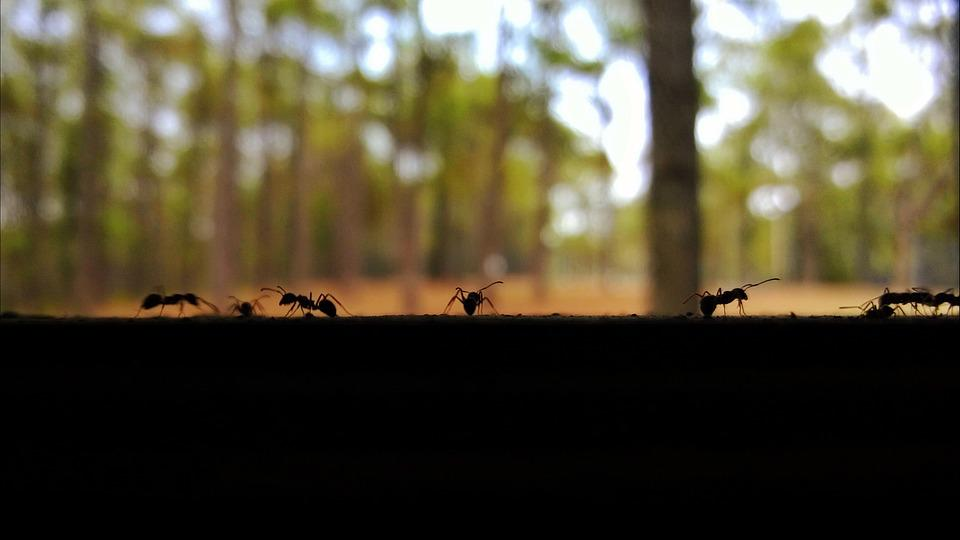Ants, Insects, Chiang Mai Thailand, Pretty Views