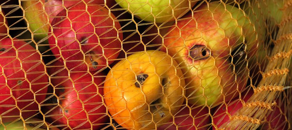 Apfelernte, Worm Hole, Fruit Bag, Apple, Orchard