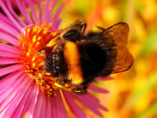 Nature, Insect, Flower, Apiformes, Plant, Animals