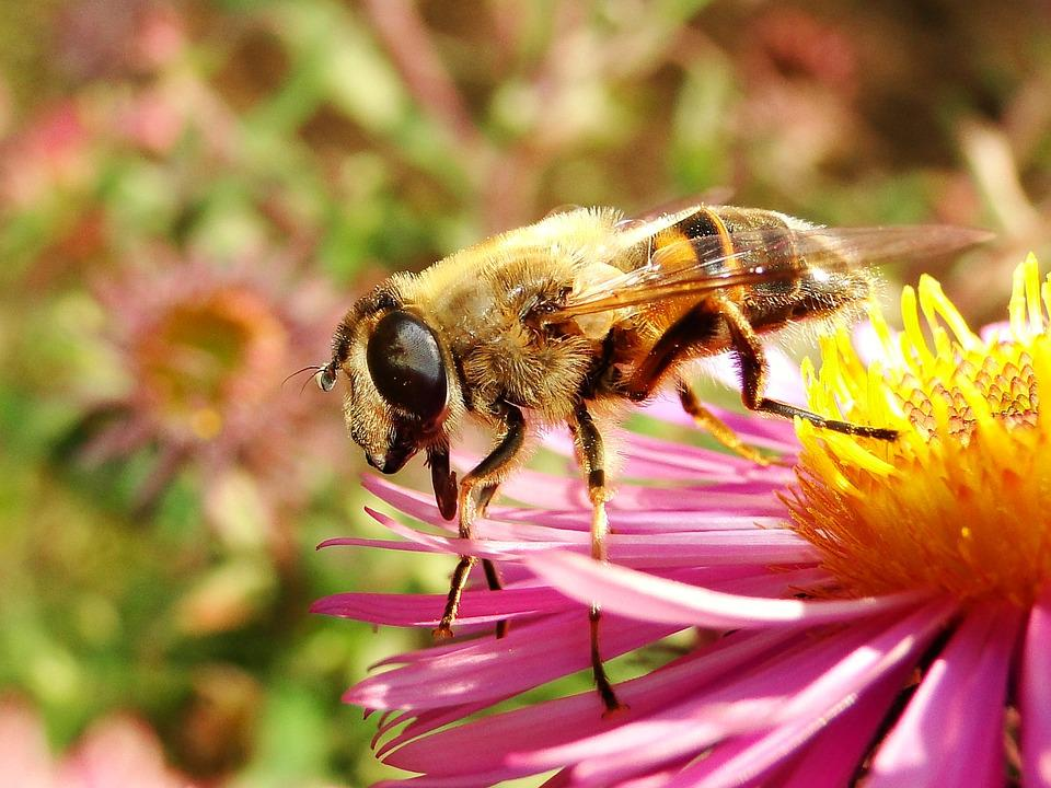 Nature, Insect, Apiformes, Honey, Pollen, Animals