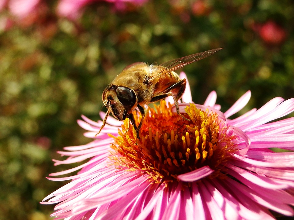 Nature, Insect, Flower, Plant, Apiformes, Animals