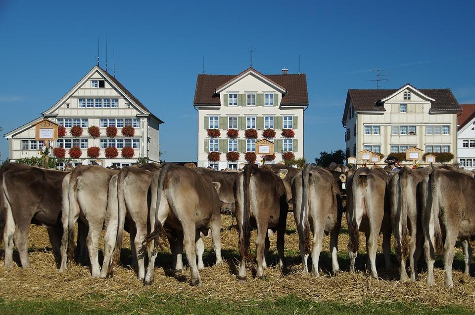 Cattle Show, Appenzell Switzerland, Stone, Customs