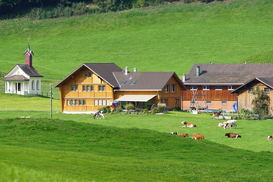 Switzerland, Appenzell, Settlement, Cows, Pasture