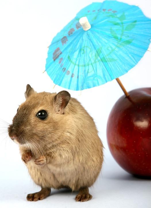 Animal, Apple, Attractive, Beautiful, Brown, Close