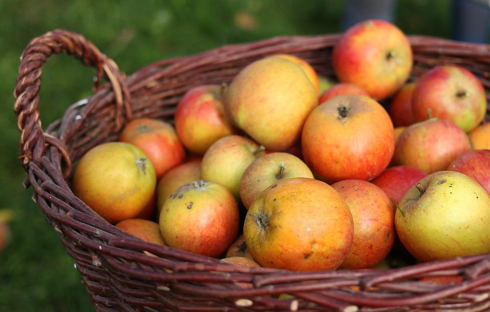 Apple, Apfelernte, Basket, Fruit Basket, Fruit