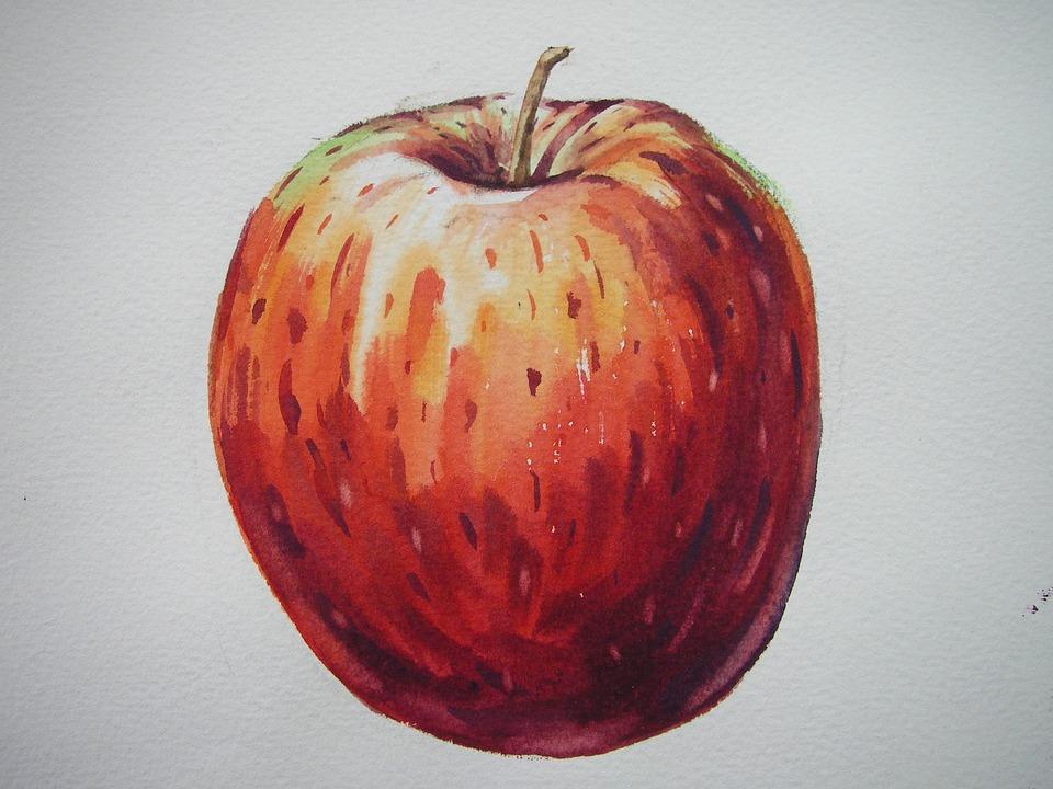 apple fruit painting. fruit, apple, painting, illustration, watercolor apple fruit painting l