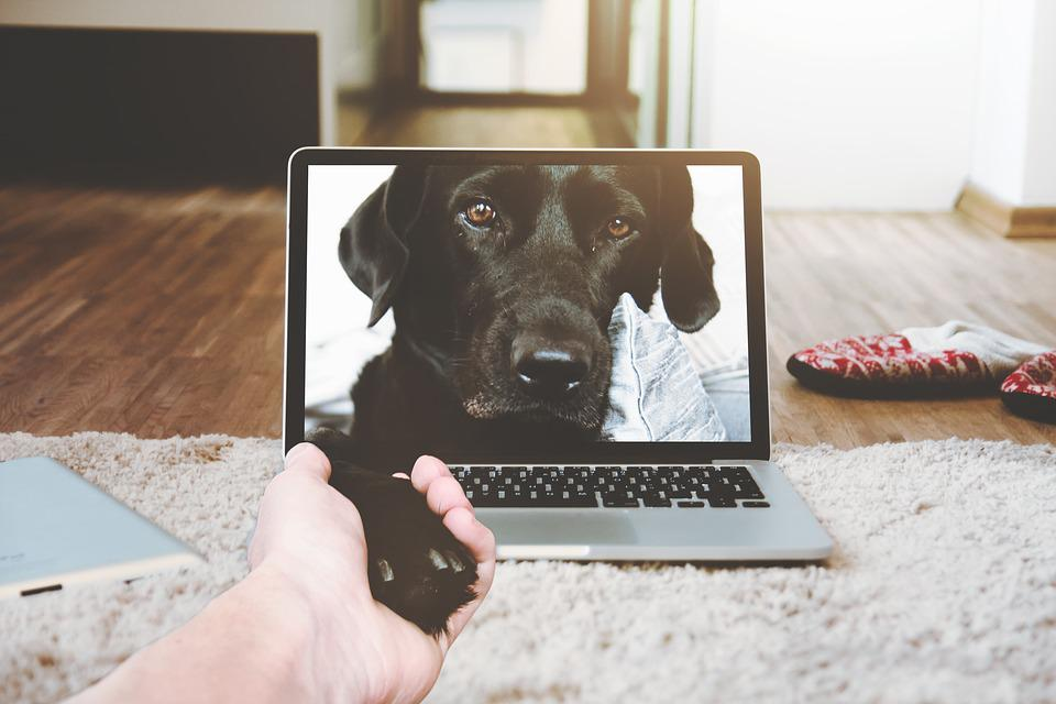 Laptop, Apple, Macbook, Computer, Browser, Bed, Room