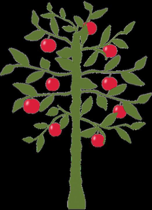 Apple Tree, Tree, Apple, Nature, Fruit, Green, Leaf