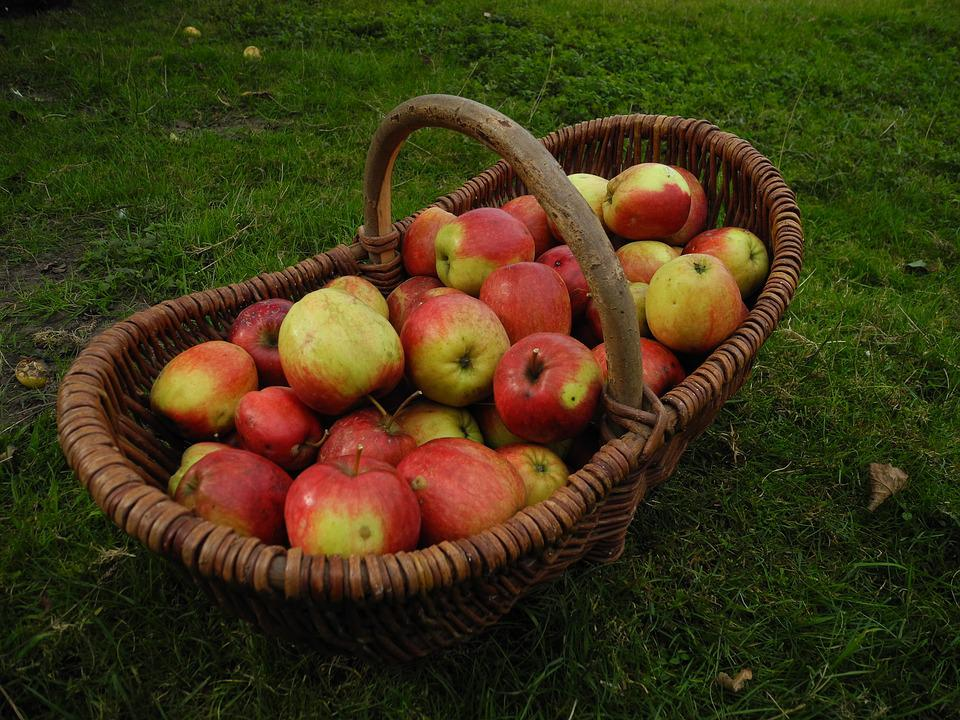 Harvest, Garden, Apple, Autumn, Apfelernte, Fruit, When
